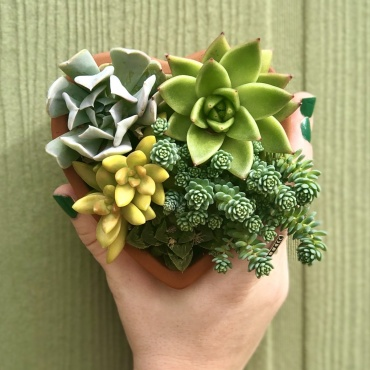Heart Succulent Planter