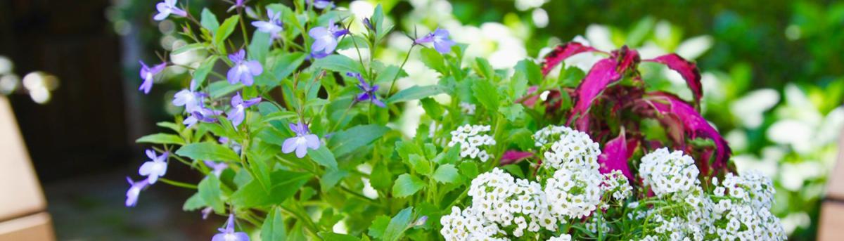 Jackson Florist Ms Flower, Garden Center Jackson Ms