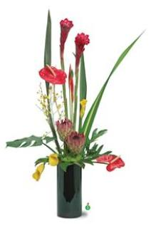 Ginger, Anthurium,Callas n Orchids